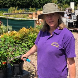 Pengethley Garden Centre Member of staff watering outdoor plants