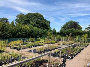 lots of Plants on sale at Pengethley Garden Centre