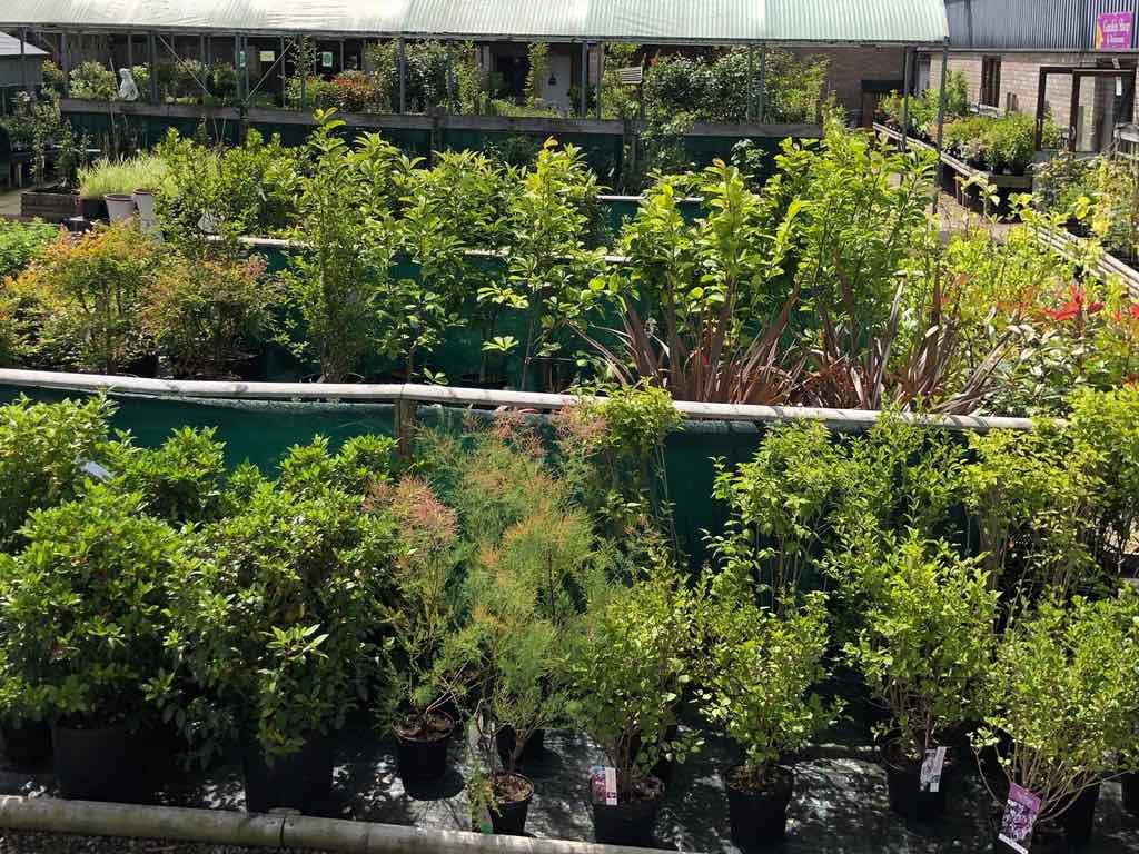 shrubs at Pengethley Garden centre